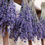 just-lavendel-treatmentt